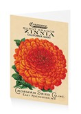 Burnt Orange Zinnia