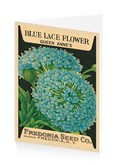 Queen Anne's Blue Lace Flower